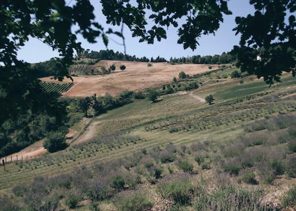 L'agricosmetica di Oway: il benessere dalla terra ai prodotti beauty