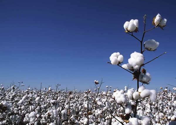 """Wrangler lancia il """"Sustainable Cotton Program"""" in Europa"""